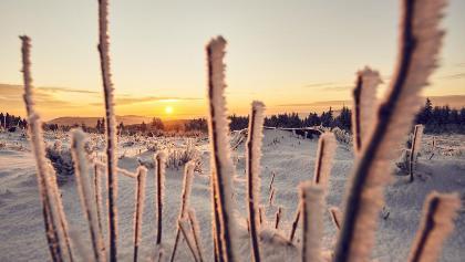 Kahler Asten im Sonnenaufgang