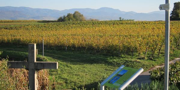 """""""Wein – Natur –Landschaft"""" ist das Motto des Pfades"""