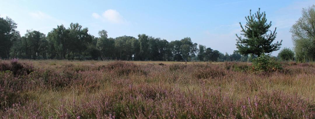 Unterwegs in der Venloer Heide