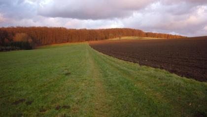 Iserbachschleife bei Rüscheid im Herbst