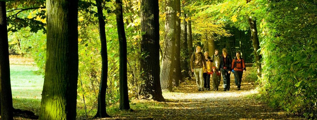 Herrliche Waldwege