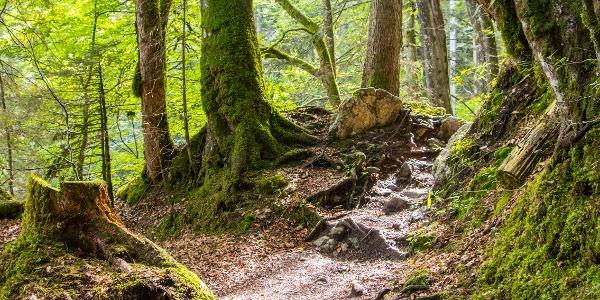 Wanderweg durch die Reichenbachklamm