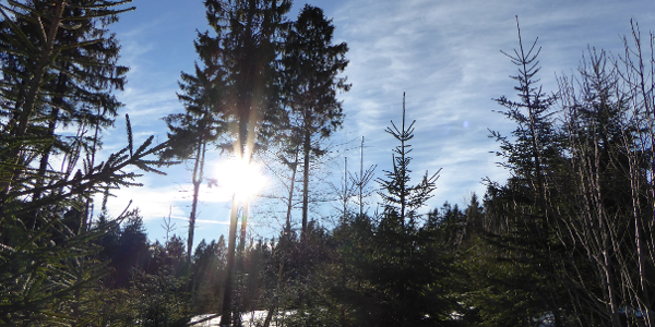 Sonne, Schnee und toller Weg