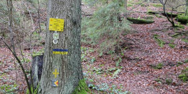 Baummarkierungen