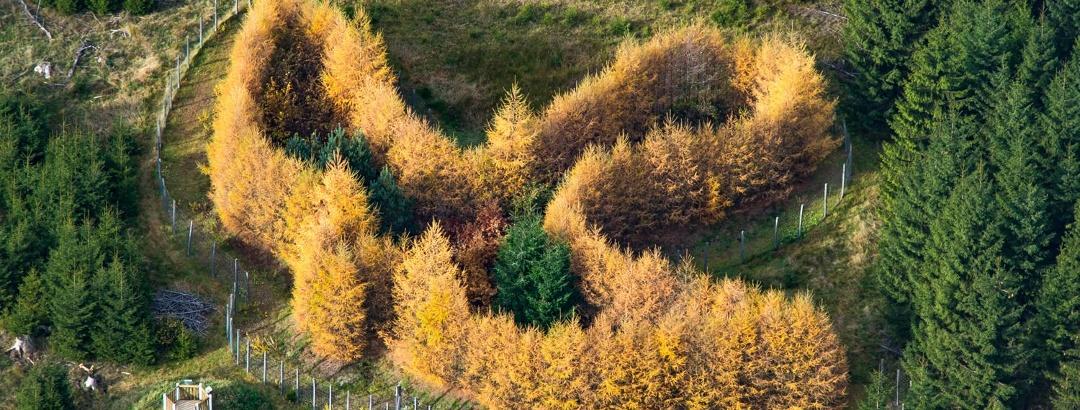 WaldSkulpturenWeg Wittgenstein-Sauerland: Der Falke