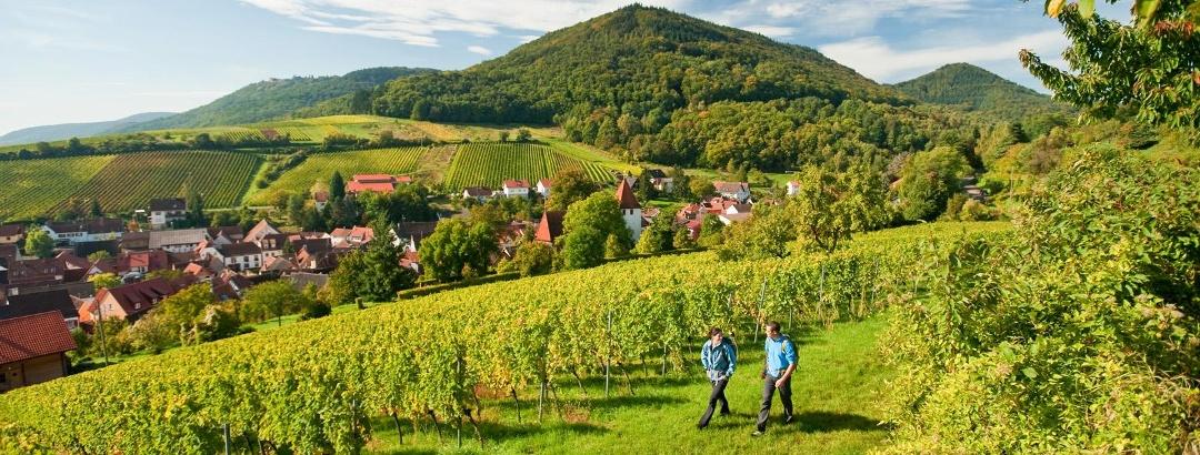 Weinsteig bei Leinsweiler