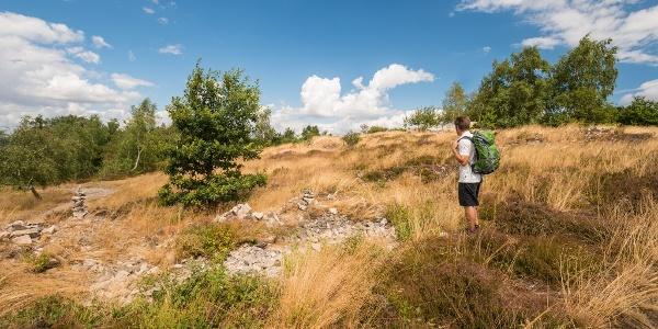 Wandern im Naturschutzgebeite Neu-Bamberger Heide