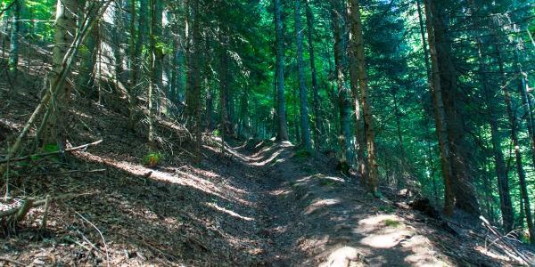 Steil geht es die Bergflanken der Karawanken wieder hinauf