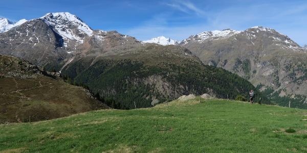 Auf der Alp Languard.