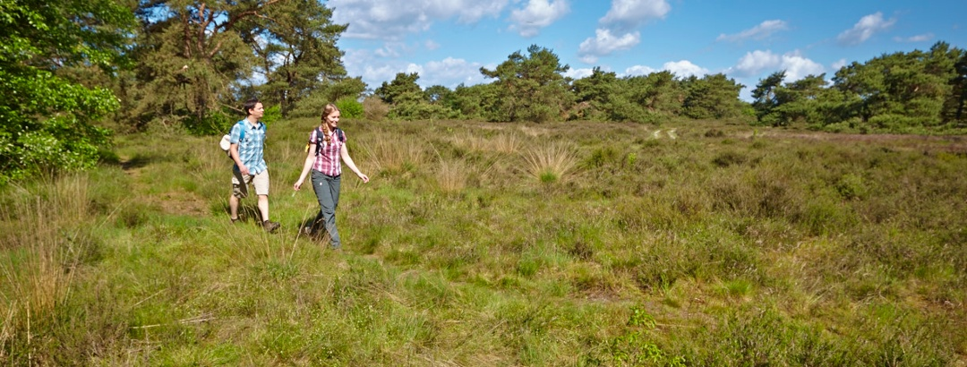 Wanderer in der Heidelandschaft in Itterbeck