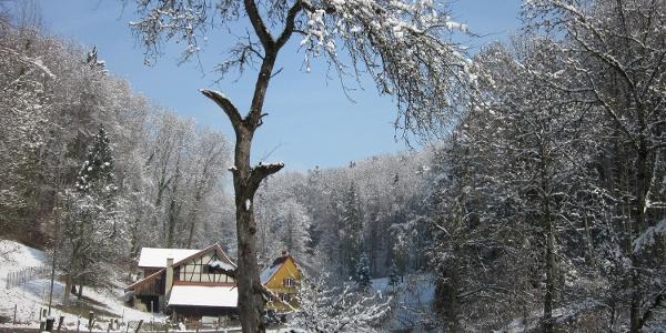 Im Winter kann man die Biberspuren einfacher entdecken