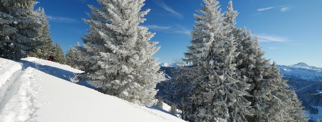 Am Koppachstein-Ostgipfel