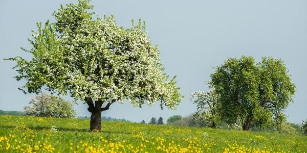 Blühende Bäume und Felder entlang der Strecke.