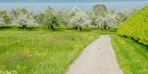 Oft ist auch der nahe Bodensee in Sichtweite.