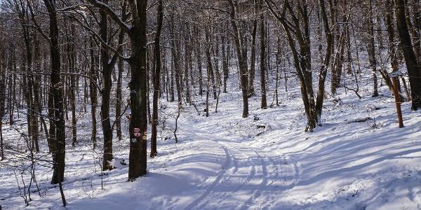 A Karancs oldalában nem találunk erdőirtásokat
