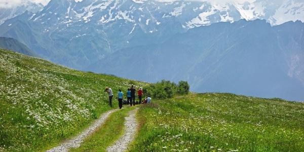 Bergwiesen auf der Alp Dötra.