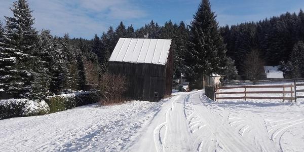 Hahnenhäuser Schnarrtanne im Winter
