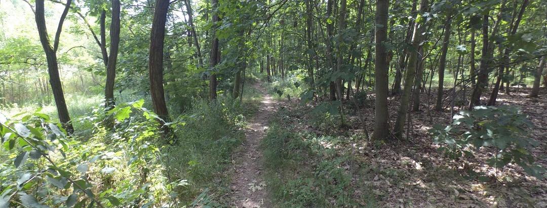 kleiner Trail vorm Zwenkauer See