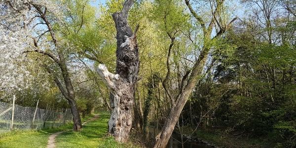 Schöne Wiesenpfade