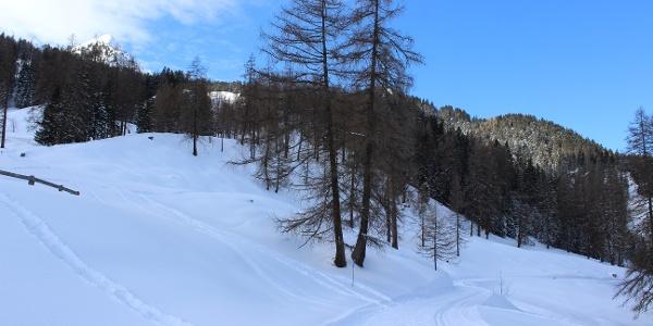 Etwas hinterhalb der Alpe Rona zweigt der Weg auf den Plandedonweg ab