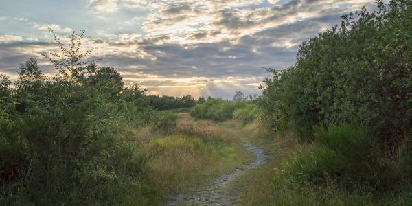 Weg im Sonnenuntergang
