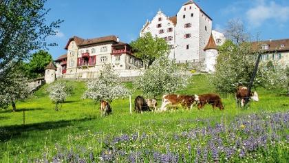 Schlossdomäne Wildegg.