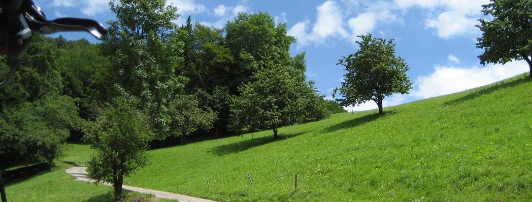 Im Aufstieg zwischen Grindel und Oberbergli Foto: