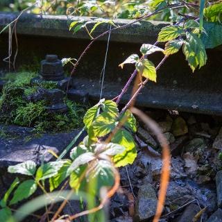 Radweg entlang der alten Bahn