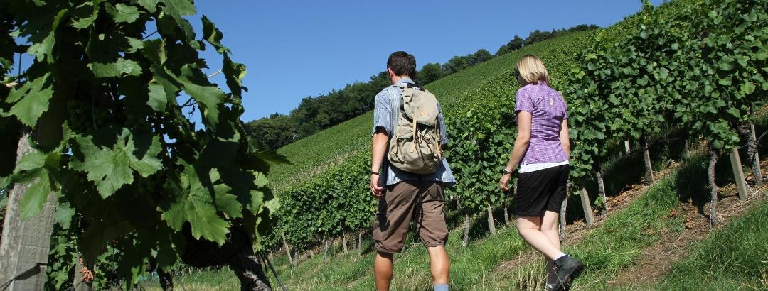 Weinwandern auf  dem Markgräfler Wiiwegli