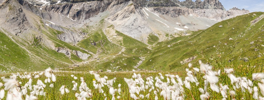 Unterer Segnesboden mit Tschingelhörnern