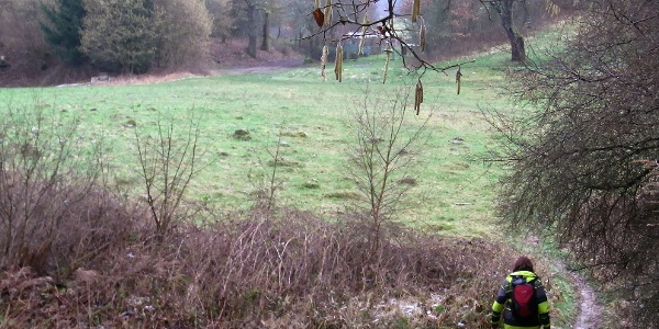 Durch das Tal des Steinbachs