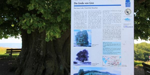 Infotafel an der Linde von Linn.