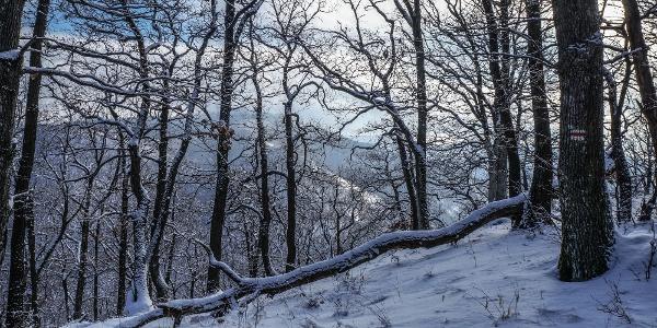 Alig háborgatott erdőben járunk