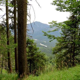 Durch den Linderwald