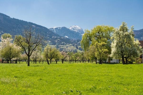 Blick auf den Wendelstein im Frühling