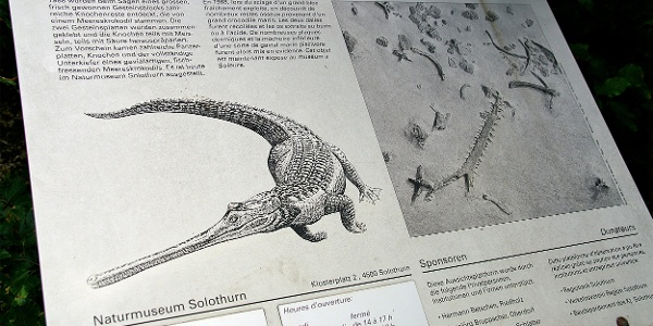 Schautafeln locken ins Naturmuseum Solothurn.