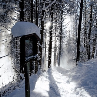 winterwandern_wald.jpg