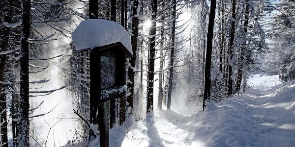 Winter Winterwandern Schnee