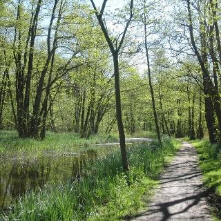 Auch grüne Wälder gibt es hier zu entdecken