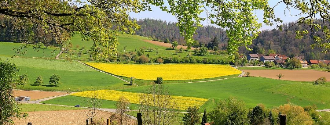 An Feldern vorbei Winterthur entgegen.