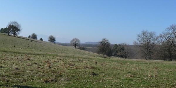Szalamáj-puszta tavasszal
