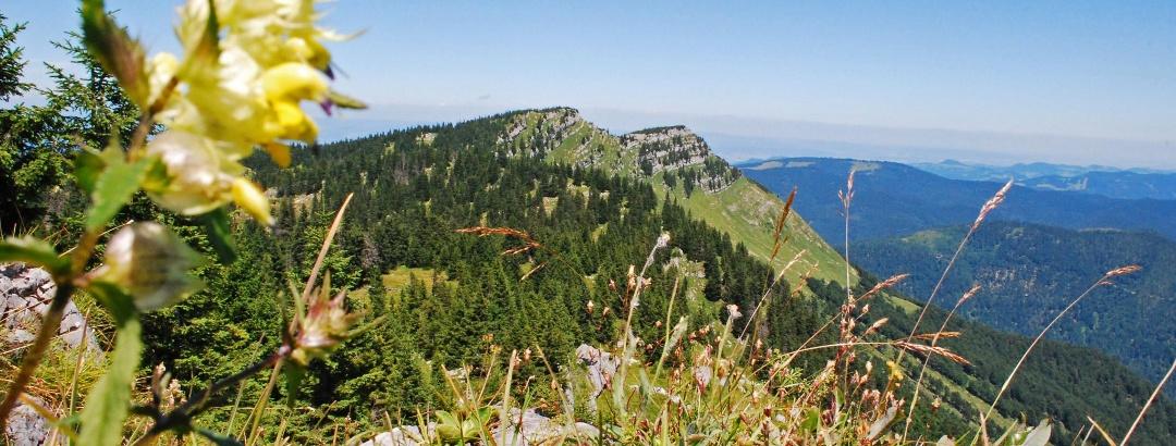 Blick vom Bärenleitenkogel auf Scheiblingstein (links) und Scheibe (rechts)