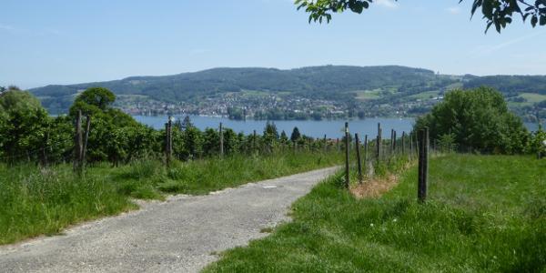 Der erste Anstieg ist geschafft, Blick zurück nach Hemmenhofen