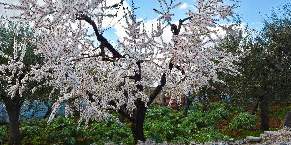 Spring Blossom Puglia