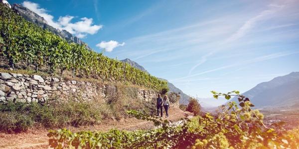 Randonnée sur le chemin du vignoble à Fully