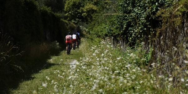 Die alte Straße bei Roncaglie