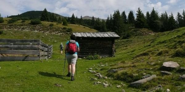 Zunächst führt uns der Wanderweg 17 durch schattigen Wald, später dann über saftige Almwiesen hinauf zur bewirtschafteten Gentersberger Alm