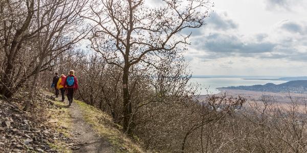 Panorámaösvény a Badacsony észak-nyugati oldalán