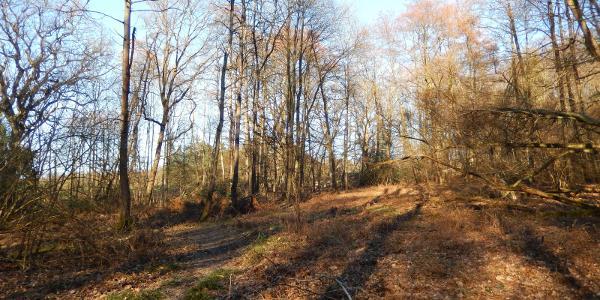 Wald bei Holzlar-Heidebergen
