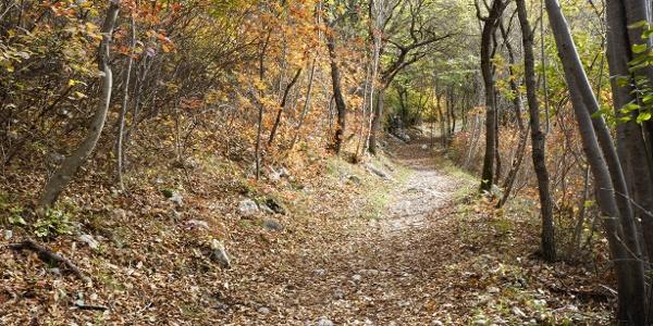 I colori autunnali sulla parte iniziale del sentiero sul Monte Taglio di Sarca